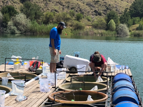 Sampling at the Mesocosm System